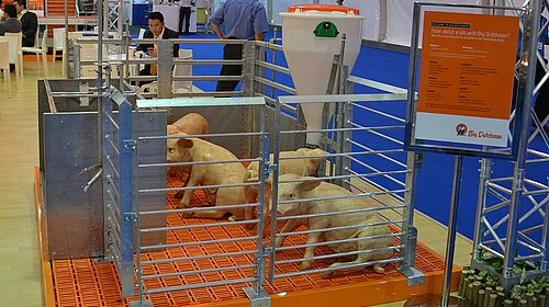 Stalleinrichtungen für die Schweinemast