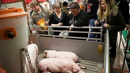 Realistische Schweinehaltung im Schweine Mobil