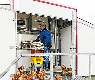 Hühner vor Packstelle