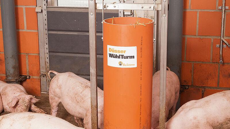 Beschäftigungsmaterial in der Schweinemast