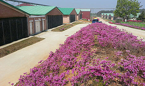 Top Sauenhaltung in Nonsan-si, Südkorea