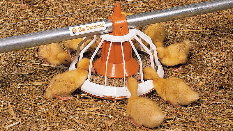 Geflügelmast: Futterschale Big Pan Plus für die Entenhaltung