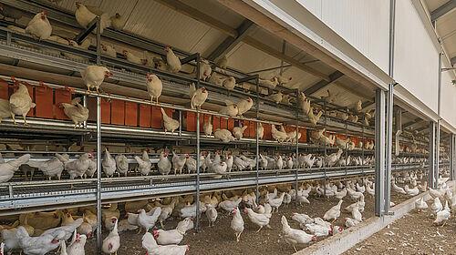 Produktphoto Volierenhaltung: Hühner in Natura Step