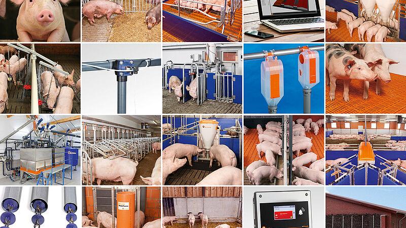 Technik für die Schweinehaltung
