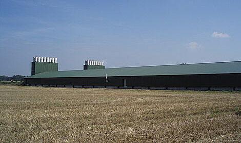 Geflügelstall für die Hähnchenmast mit Stalleinrichtungen von Big Dutchman