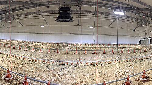 Panoramafoto neuer Hähnchenmaststall von innen