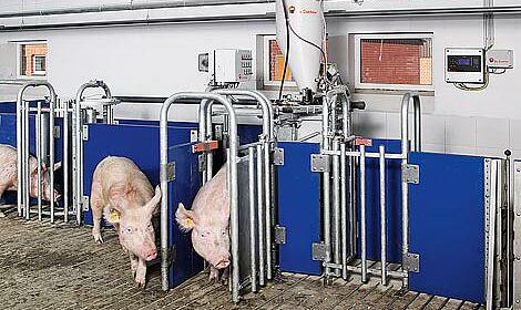 Stalltechnik / Fütterungsanlagen für die Sauenhaltung: Flüssigfütterung, Trockenfütterung, Abruffütterung, Stallklima, Abluftwäscher, Abluftreinigung