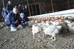 Besucher knien auf Boden neben den Hähnchen