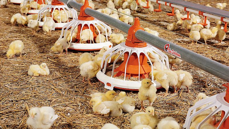 Futterschale FLUXX für die Hähnchenmast